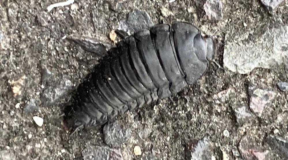 この生き物は何ですか?? 生態等詳しく知りたいです!お願いします!