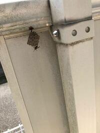 写真、分かりにくいかもしれませんが…部屋のベランダに蜂が巣を作ってました。これは何蜂でしょうか?