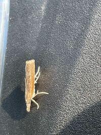 これはなんという虫ですか? 教えて虫博士!