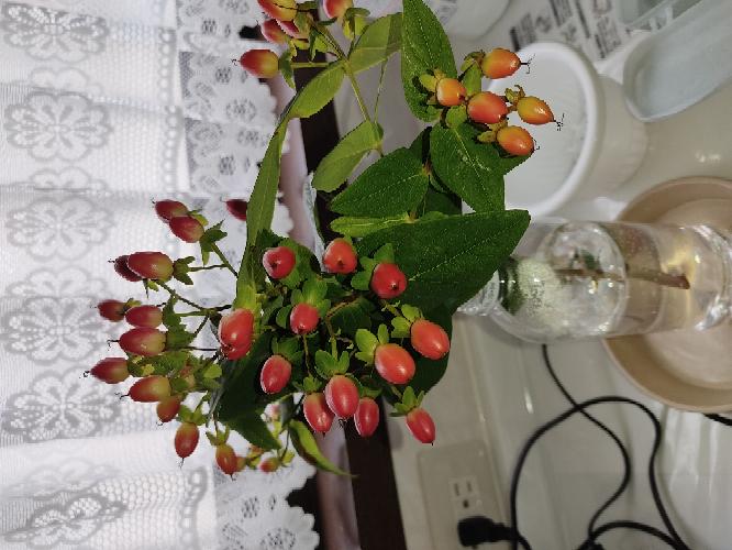 この木は何という名前ですか?