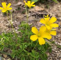 この花の名前は何ですか? 撮影日は2021年4月20日で撮影場所は兵庫県です。 よろしくお願いします。
