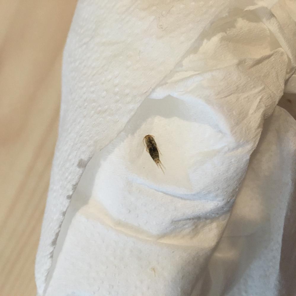 虫の画像添付しますのでご注意ください。 この虫はなんという名前の虫でしょうか? 築35年ほどの賃貸に入居前にバルサンをしたところ、この虫が数匹死んでいました、、。 現在入居1週間ほどで、生きているこの虫が現れました。。動きがすごく早かったです。 また、できればもう見たくないので、なるべく出てこないように対策などあれば教えてください。 よろしくお願い致します。
