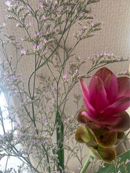 この花2種の名前わかる方 教えてください