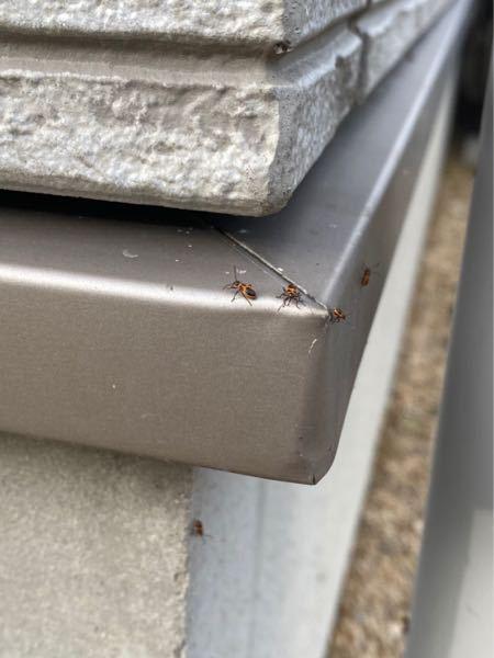この虫の名前、わかる方いらっしゃいますか!? 先日、玄関先でふと見かけて辺りを見渡すと軽く10~15匹は居ました。 大きさは平均的に7mm~1cm 色はオレンジと黒のみ 特に飛び回るって訳ではないですし害は今のところはないですが、なんにせ昆虫が苦手なもので… ネットでも少し探してみたものの見つからず、こちらでお手を借りた方が早いと思い質問しました!! 詳しい方、お願い致します!