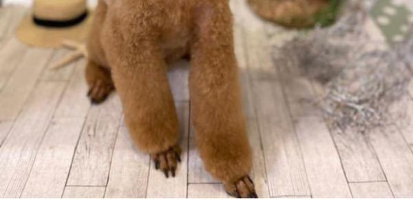 トイプードルの足の所だけ短めにカットしてる切り方ありますよね、これはどのようなメリットがあるのでしょうか? 写真のような感じです。