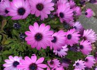 この花の名前は何ですか? 撮影日は2021年5月5日で撮影場所は兵庫県です。 よろしくお願いします。