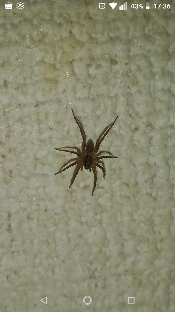 この蜘蛛は何と言う蜘蛛でしょうか? 足が多い?