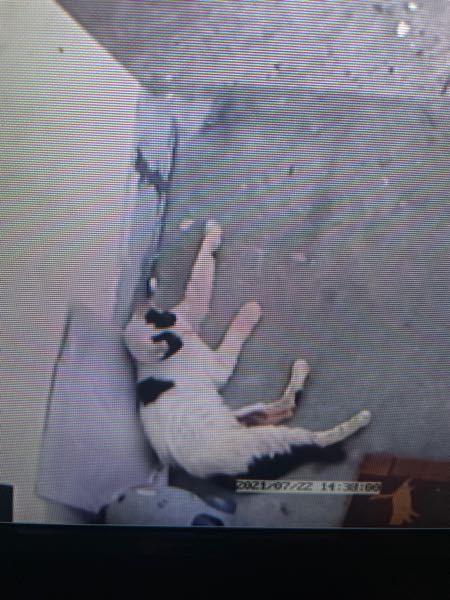 近所の汚い猫が毎日のようにきて玄関で寝たり 車の上で寝たりして困ってます。いろんな所で糞尿も するし花壇にもされお花が枯れかけです。 他のいえにはほぼ行かず私の家にしか来なく悪さばかりします。 そのくせ近寄ると逃げていくしムカつきます。 定期的に水庭やガレージ車の屋根に水をを撒いていてもすぐに乾きすぐやってきます。 猫避けの薬剤も撒いた事もあるのですが全く聞きませんでした。 どうにか来させない様にする方法はないでしょうか?