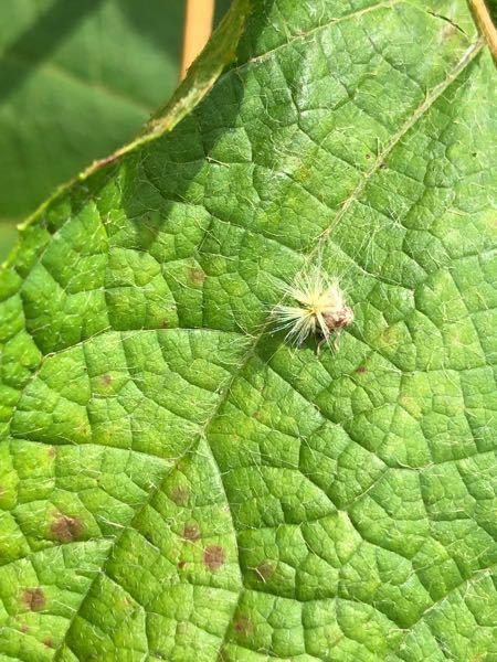 この昆虫は何という名前なのでしょうか? 教えて頂けたら幸いです。