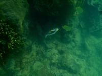 此方の魚の名称は何? 撮影場所;沖縄本島の大度海岸