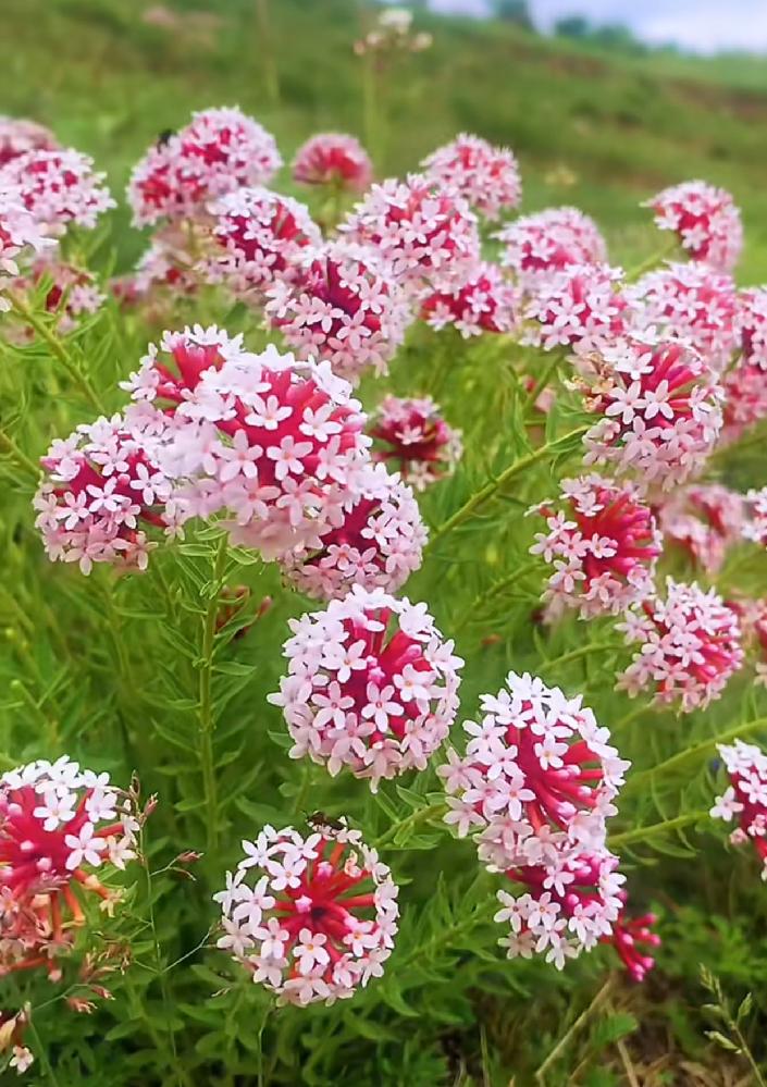 画像の花の名前を教えて下さい!