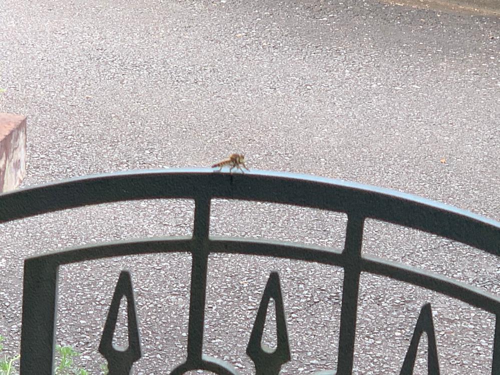 この虫は何ですか? ピントが合ってなく恐縮ですが、調べてもわからなかったためお力お借りしたいです。 毎日庭に居て追っ払っても、戻ってくるため、害がある虫なのかどうなのか特定したいです。 よろしくお願い致します。
