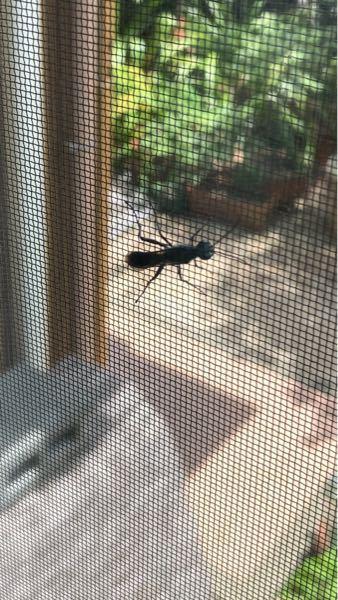 これってなんの虫ですか? 黒くて大きいです。害はありますか?