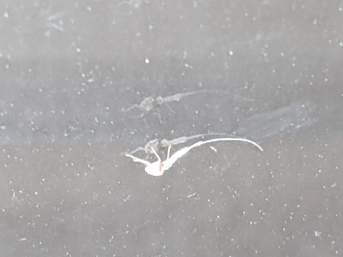 窓にくっついていました。これはなんですか?