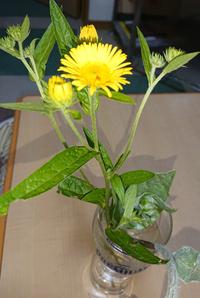 この花の名前をお願い致します。 花が咲くまで放置したことは無いのですが、先ほどコンクリートの隙間から健気に咲いていたので切り花にしました。雑草でなく、花の類に見えます。