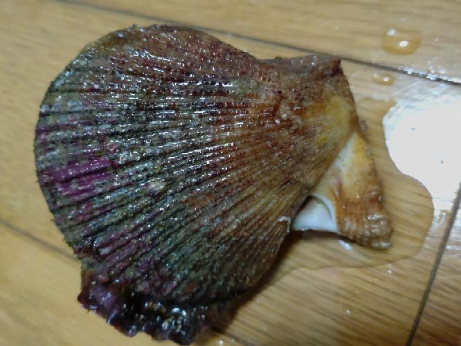 海水浴場の近くの岩がゴロゴロする場所で見つけたこの貝はヒオウギ貝に似ていますが、食べても大丈夫でしょうか? よろしくお願いします。