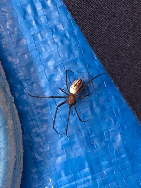 この蜘蛛は、有害ですか?