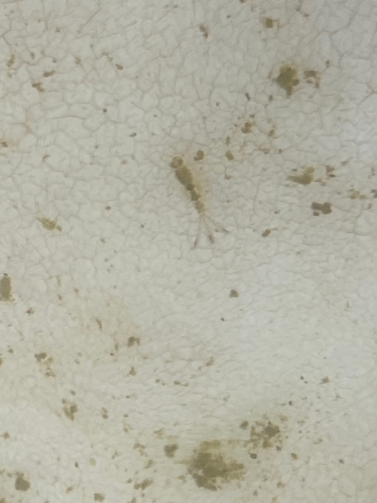 うちの屋外のビオトープの中になんらかの生物がいました。これはメダカに害を与える生き物でしょうか?無害であれば一緒に入れときたいと思います。どなたかわかる方いらっしゃれば教えて下さい。