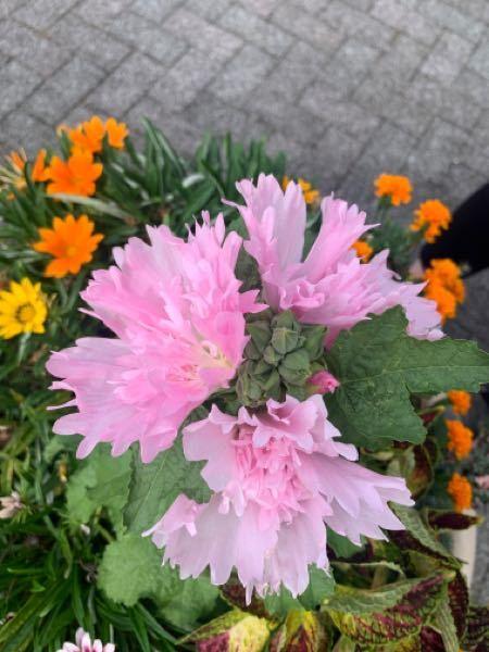このお花の名前ってわかりますか?