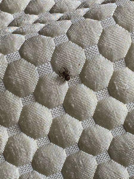 このクモの名前を教えてください
