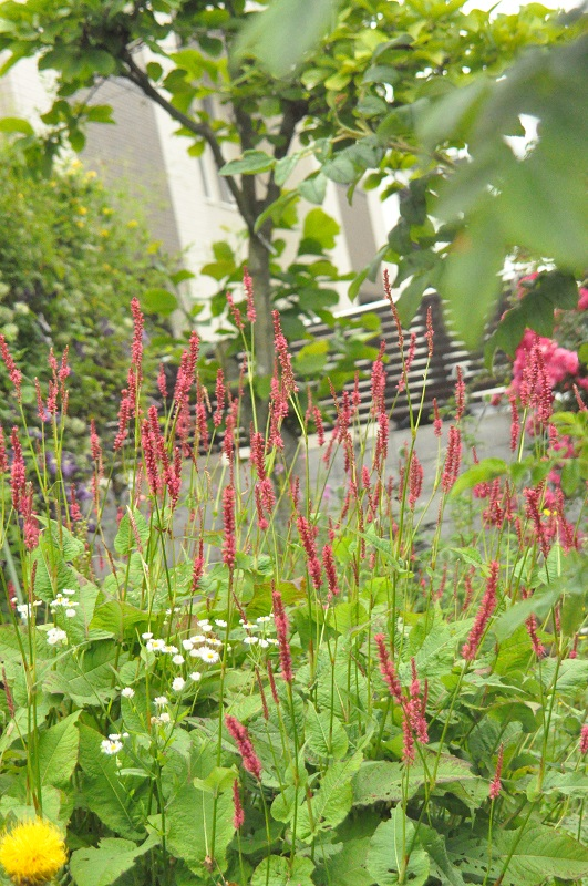 この赤く糸のような花の名前を教えて下さい