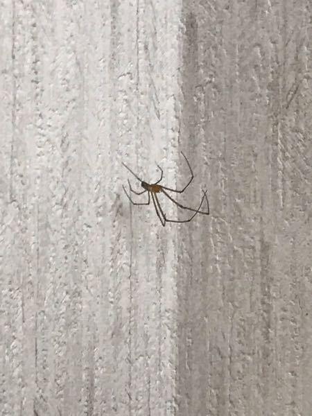 家に2〜3cmくらいの蜘蛛が巣を張ってるんですけどこの蜘蛛はなんですか? 特に害は無いですか?