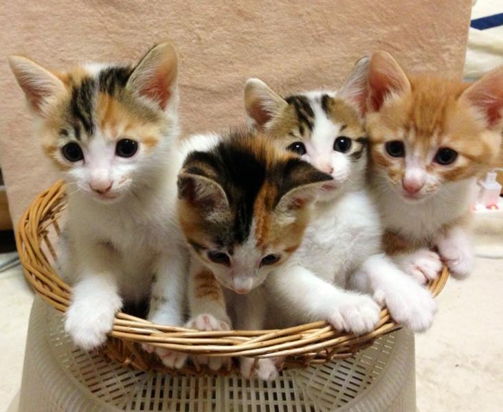 こんばんは ねこを飼ってる皆さん 皆さんのPCの壁紙は ねこちゃんですか?? 私のPCの壁紙は 可愛い仔猫4匹です!!