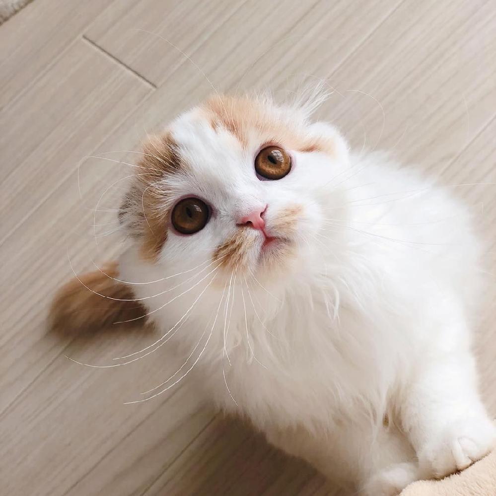 こんばんは 私にまるで興味ニャイ??