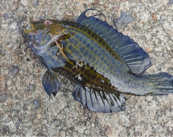 堤防で釣れたのですが、これはなんの魚でしょうか?
