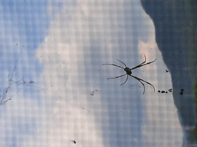 これはなんていう蜘蛛ですか?黄色いしましまがあります。昆虫マニアの方ぜひ教えて下さい。