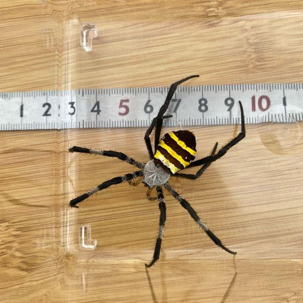 これは、なんと言うクモですか? #蜘蛛 庭にいました。