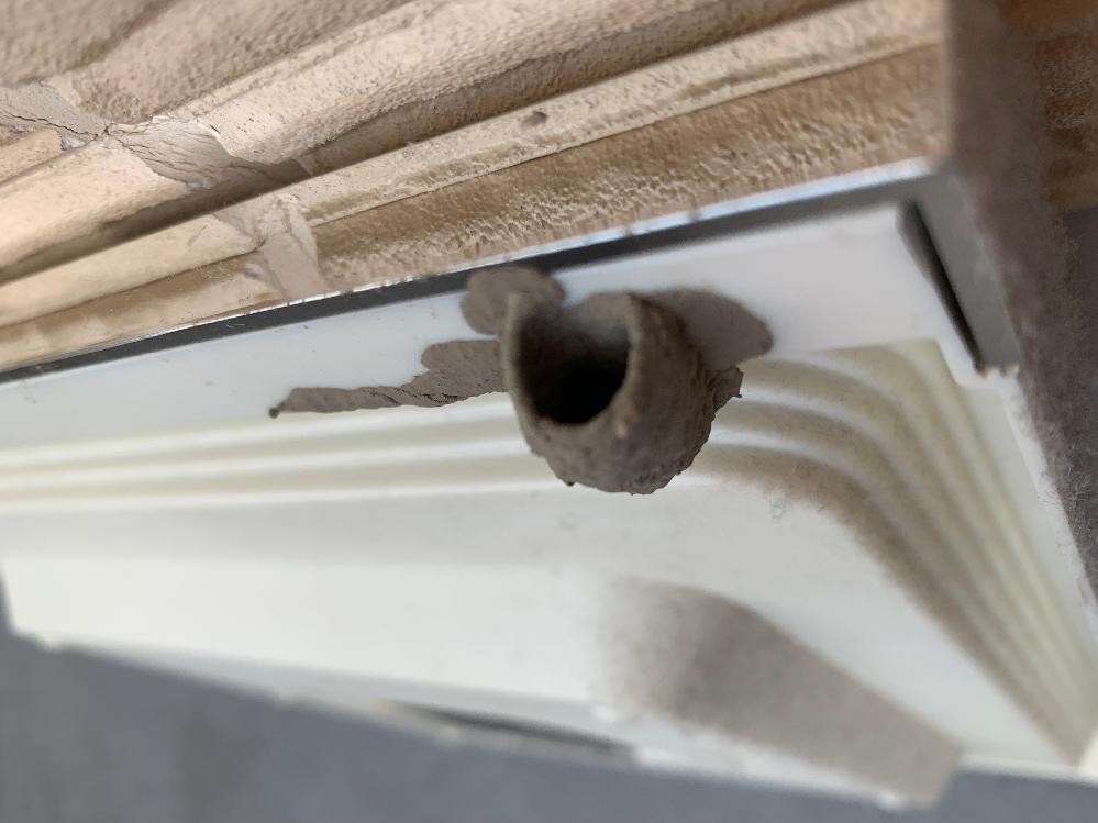 家の中に足の長い虫が飛んでいて、気づけば時計の裏にこのような巣を作ってたのですが、 なんという虫の巣かわかる方いますでしょうか