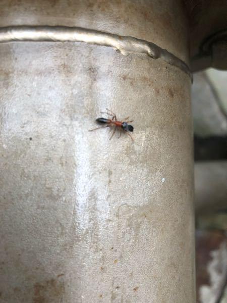 こいつ何者!? 見た事ない。蟻?