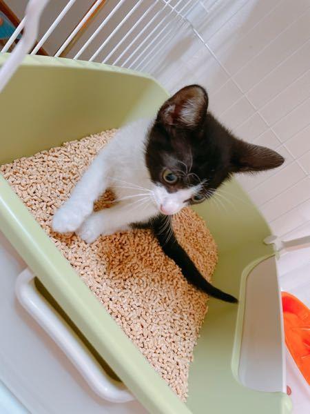 猫についてですが 白と黒の猫を最近飼い始めました! 質問を2つさせて頂きます! ペット保険に入ろうと思うのですが ネットで入る際に種類は何かと 項目があります。 ① 白と黒のハチワレ(写真添付)なんですが 調べたら 「日本猫」と「混血猫」と出てきます… こちらの種類は何になるのでしょうか ② 保険ですが沢山あり過ぎて分かりません… アニコムかアイペットかSPに 入ろうかと思ってるのですが オススメなどありますでしょうか ♀️