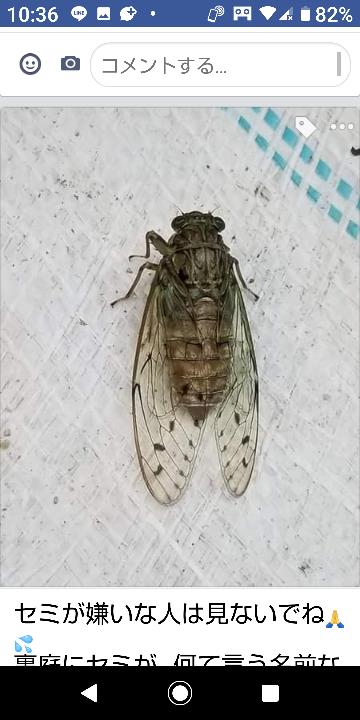 この蝉の名前を教えて下さい。