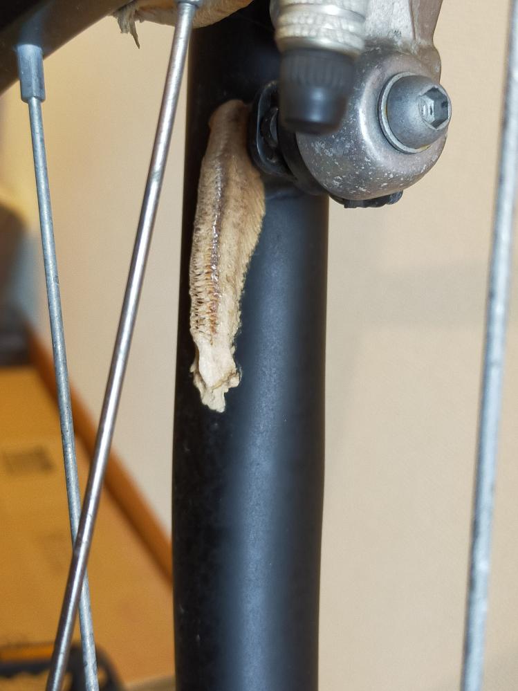 数ヶ月屋外にて放置していた自転車に、画像の繭のような卵のような物が付いていました。 虫の蛹か何かでしょうか? 気持ち悪いので取りたいのですが、中から虫などが湧いて出てくるなどしませんか? 詳し...