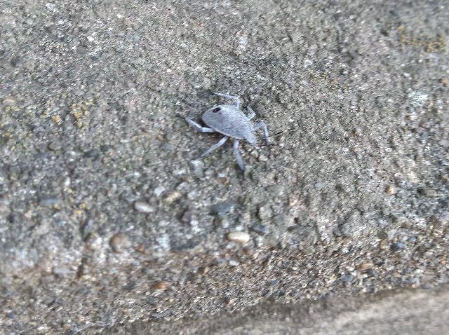この虫は、なんですか?