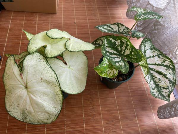この観葉植物の名前と種類?はなんですか?