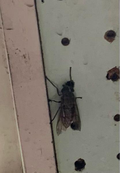 これって蜂ですか?
