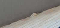 これはドロバチの巣でしょうか? 洗濯の時に蜂(ドロバチ?)が飛び回ってきて嫌なんですが…