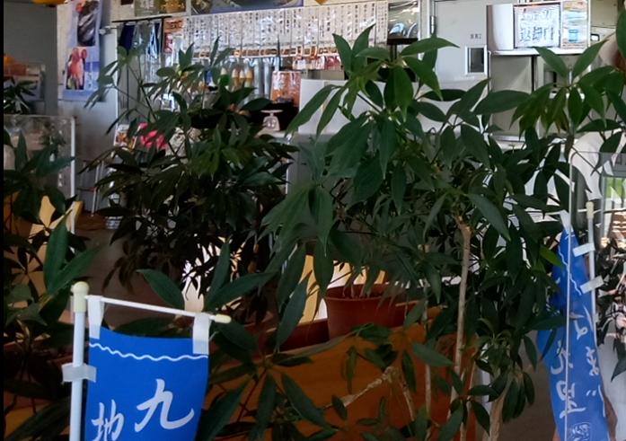 ご案内の名前不明鉢植えをご教授くださいますか (全長~50㎝/葉は濃い緑/鉢入り4~5本)です