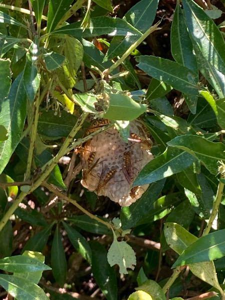 この蜂にたった今刺されました。 大丈夫でしょうか?