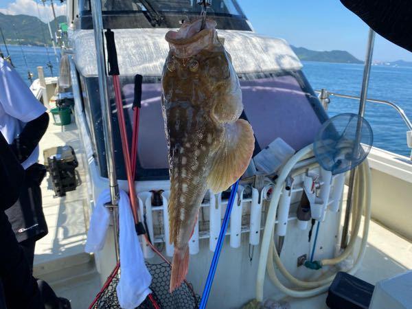 この魚ってなんですか? 食べれますか?美味しいですか?