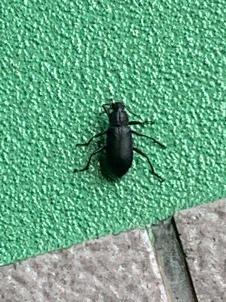 この虫の名前は何ですか?