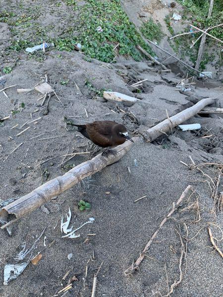 この鳥はなんですか?茨城の海岸にいました。カラス、ハトではないです。