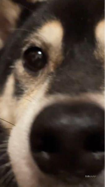 この犬の犬種分かりますか??