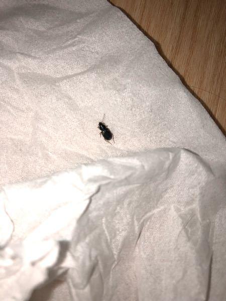 虫博士さんいたら教えてください! 部屋に虫が出ました! 大きさは5ミリくらいで、背中に白い点みたいな模様が3つ付いてます! この虫何かわかる人いますか? 無視に詳しい方いたら教えてください!!
