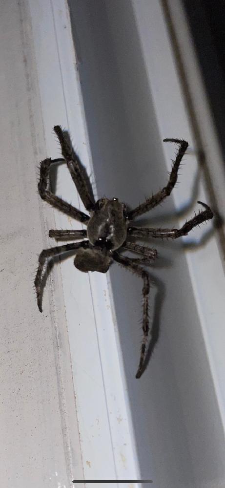 この蜘蛛の名前を教えてください!