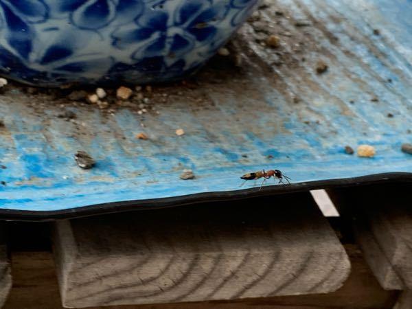 大きなアリに見えるんですけど、これは何という虫ですか?