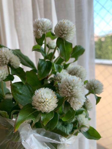 このお花の名前は何ですか?